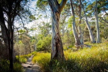 The track to Grass Point, East Cove, Bruny Island.